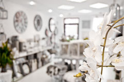 Orchid flower in shop Stock Photography
