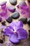 Orchid flower for spa Stock Photos