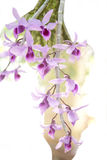 Orchid flower. Spring orchid flower in spring sun Stock Photo