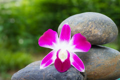 Orchid flower on stone Stock Images