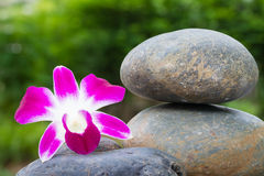 Orchid flower on stone Royalty Free Stock Photo