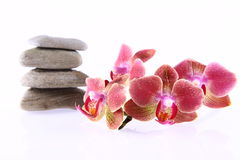 Orchid flower and stones royalty free stock images