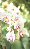Orchid flower. Summer orchid flowers at daylight Royalty Free Stock Photos