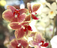 Orchid flower. Summer orchid flowers at daylight Stock Images