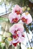 Orchid flower. Summer orchid flowers at daylight Royalty Free Stock Image