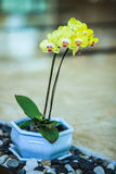 Orchid flower. Table decoration in the living room Royalty Free Stock Image