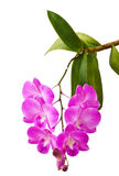 Orchid Flower for wall Background. Thai orchid flower in heart shape Stock Photo