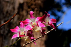 Orchid. Flower with tree background royalty free illustration