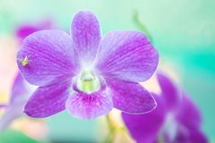 Orchid flower with tree grow. In garden stock image
