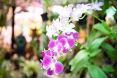 Orchid flower with tree grow. In garden stock photography