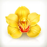 Orchid flower vector icon Royalty Free Stock Image