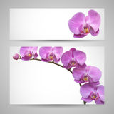 Orchid flower vector template Royalty Free Stock Photo