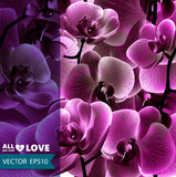 Orchid flower vector template. EPS10. Royalty Free Stock Photo