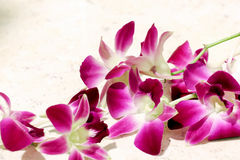 Orchid flower view background   Royalty Free Stock Photography