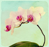 Orchid flower. Vintage style. Paper textured. Royalty Free Stock Photo