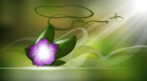 Orchid flower or violet aroma background ads template, droplet mock up isolated on shinny green backdrop. Place for Royalty Free Stock Photo