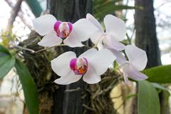 Orchid flower whit Stock Image
