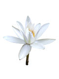 Orchid Flower white Branch Stock Photography