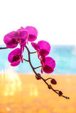 Orchid flower on the window. Royalty Free Stock Photos