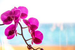 Orchid flower on the window. Stock Photo