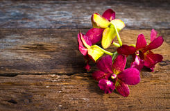 Orchid flower on wood plank Stock Images