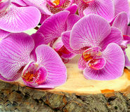 Orchid flower. Orchid flower on wooden background Royalty Free Stock Image