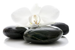 Orchid flower on zen stones Stock Photography