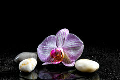 Orchid flower with zen stones Stock Images