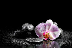 Orchid flower with zen stones Stock Photography