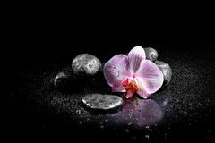 Orchid flower with zen stones Royalty Free Stock Images