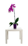 Orchid in flowerpot Royalty Free Stock Image