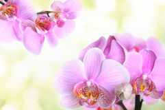 Orchid flowers background Stock Images