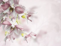 Orchid Flowers Background Royalty Free Stock Image