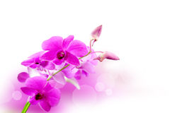 Orchid flowers background royalty free stock photos
