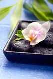 Orchid flowers with bamboo leaves and spa stones Royalty Free Stock Photos