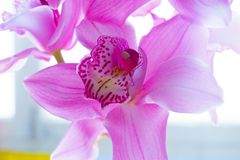 The Orchid flowers Beautiful floral background for greeting cards, wallpapers, covers, screen savers, posters, wedding invitations. The Orchid flowers. Beautiful Stock Photo