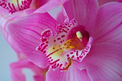 The Orchid flowers Beautiful floral background for greeting cards, wallpapers, covers, screen savers, posters, wedding invitations. The Orchid flowers. Beautiful Stock Photos