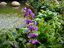 Orchid flowers at the Beautiful Japanese garden Stock Photos