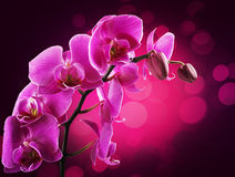 Orchid flowers border Stock Images