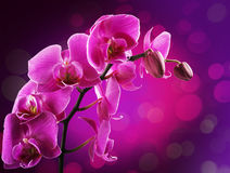 Orchid flowers border Royalty Free Stock Image