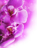 Orchid flowers border Royalty Free Stock Photos