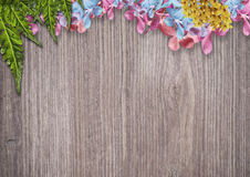 Orchid flowers border Royalty Free Stock Photo
