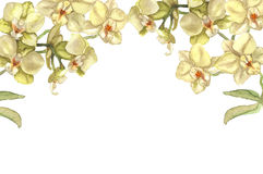 Orchid flowers border Royalty Free Stock Images