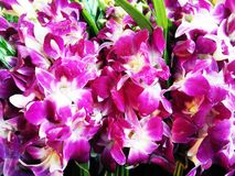 Orchid flowers. Bouquet of violet orchid flowers with water droppings on petals Stock Photos