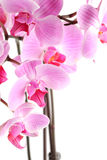 Orchid flowers on branch Stock Image