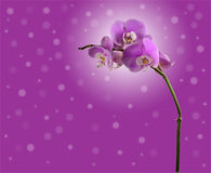 Orchid flowers on branch. background Royalty Free Stock Photography