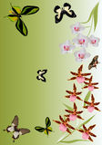 Orchid flowers and butterflies pattern Royalty Free Stock Photography