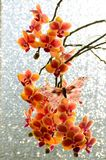 Orchid flowers with a butterfly  on sparkling background royalty free stock photo