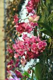 Orchid flowers christmas decore interior Royalty Free Stock Image