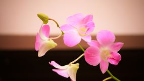 Orchid flowers. Closeup of orchid flower with fresh green nature blurred background at the park Stock Photo